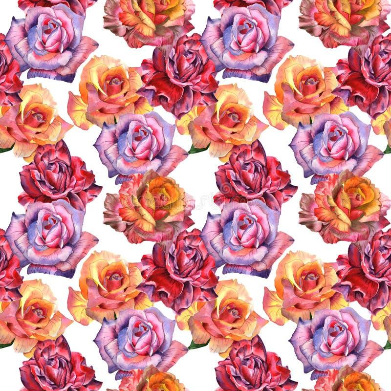 Modello di fiore rosa del Wildflower in uno stile dell'acquerello isolato fotografia stock libera da diritti