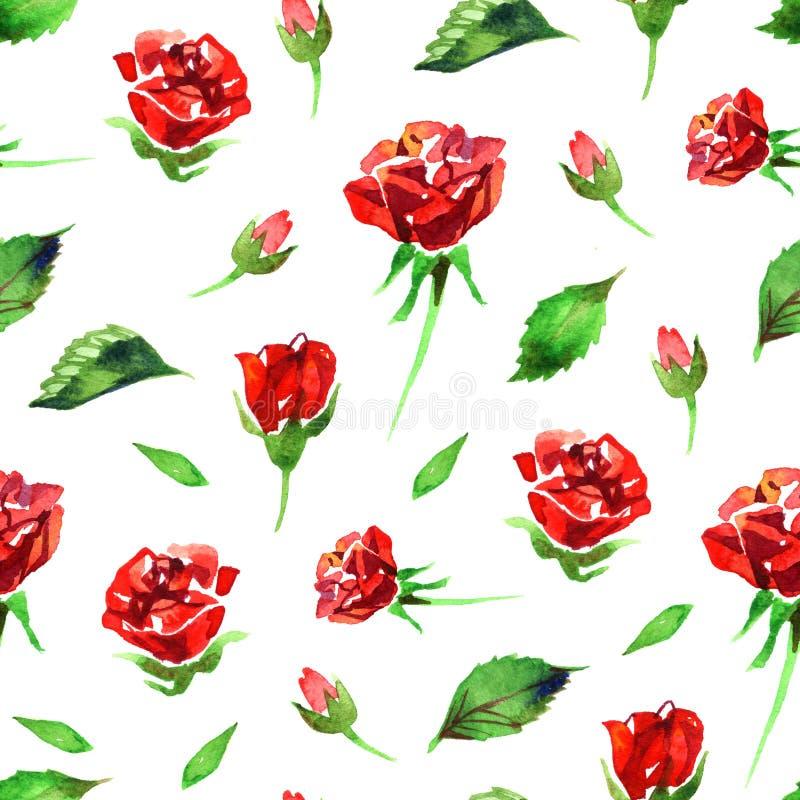 Modello di fiore rosa del Wildflower in uno stile dell'acquerello isolato Nome completo della pianta: rosa rossa, hulthemia, rosa illustrazione di stock