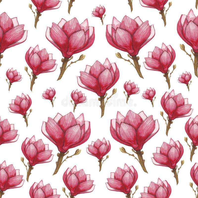 Modello di fiore senza cuciture dell'acquerello della magnolia royalty illustrazione gratis