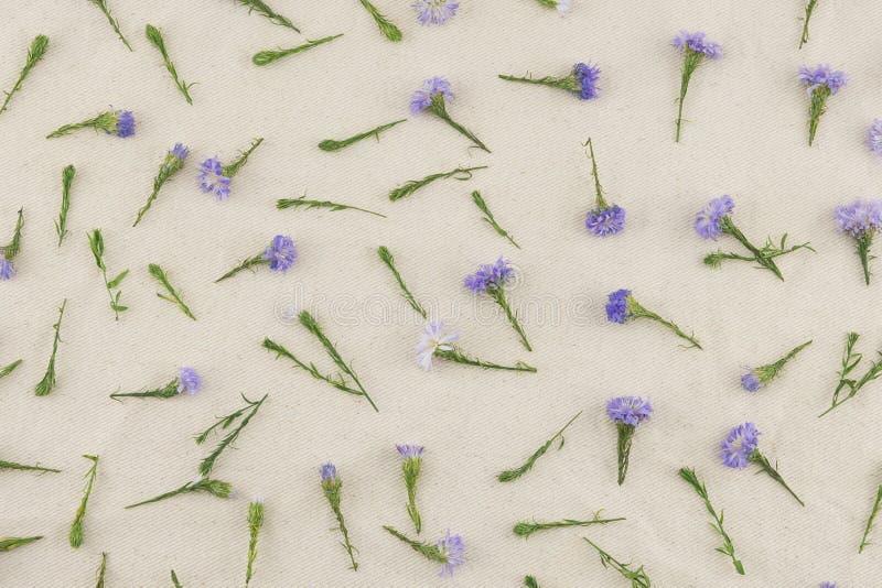 Modello di fiori porpora della taglierina fotografia stock libera da diritti