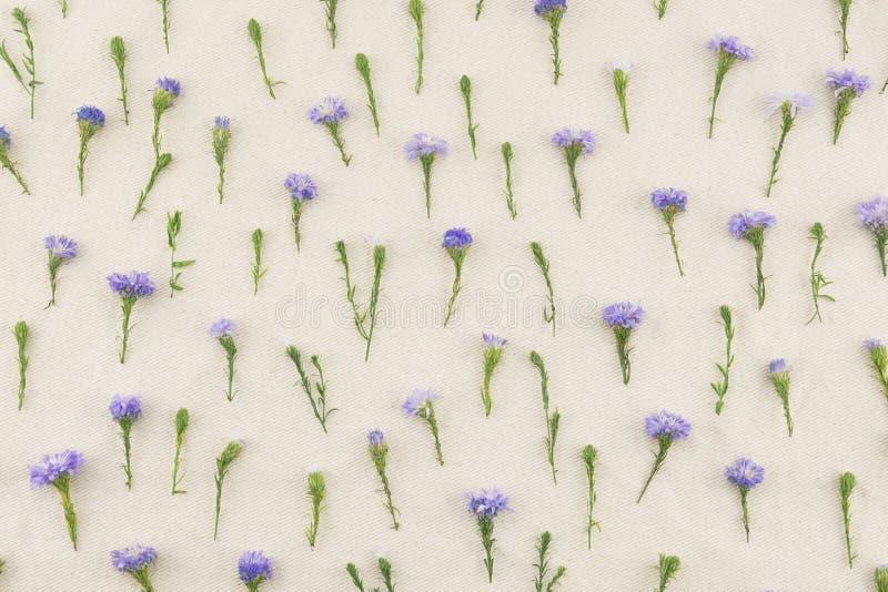 Modello di fiori porpora della taglierina immagini stock