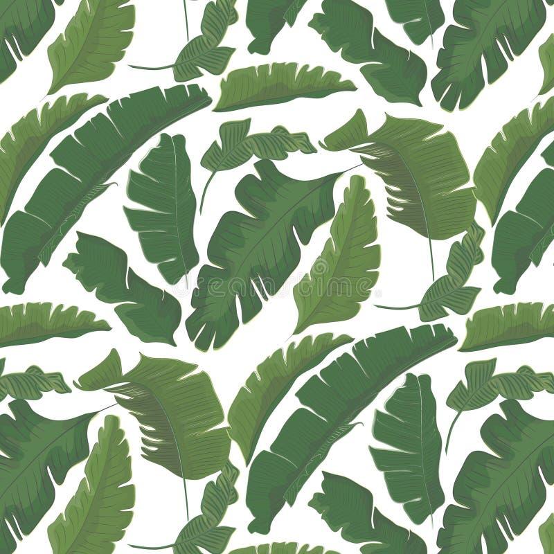 Modello di foglia di palma tropicale di paradiso di estate Decorazione esotica dell'estratto del fogliame della foresta Banana d' illustrazione di stock