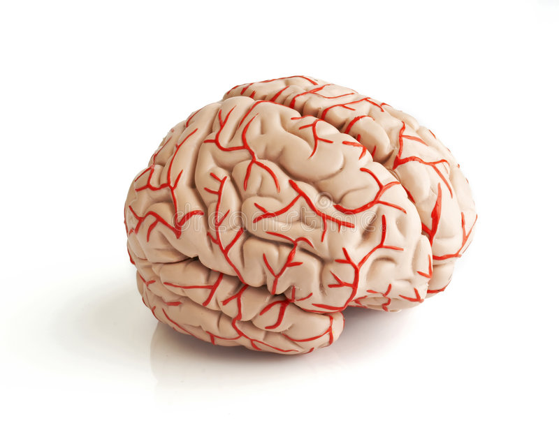 Download Modello Di Gomma Anatomicamente Corretto Del Reggiseno Umano Illustrazione di Stock - Illustrazione di scienza, formazione: 3884027
