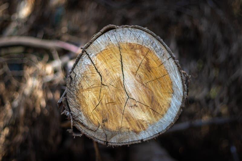 Modello di legno di taglio immagine stock