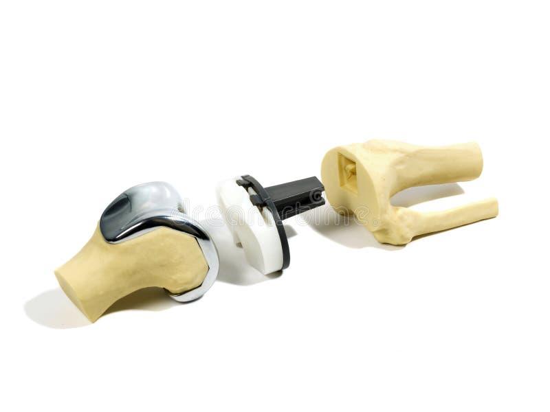Modello di plastica di un rimontaggio del ginocchio fotografia stock libera da diritti