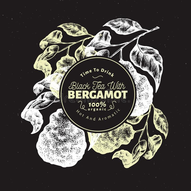 Modello di progettazione del ramo del bergamotto Struttura della calce del Kaffir Illustrazione disegnata a mano della frutta di  illustrazione di stock