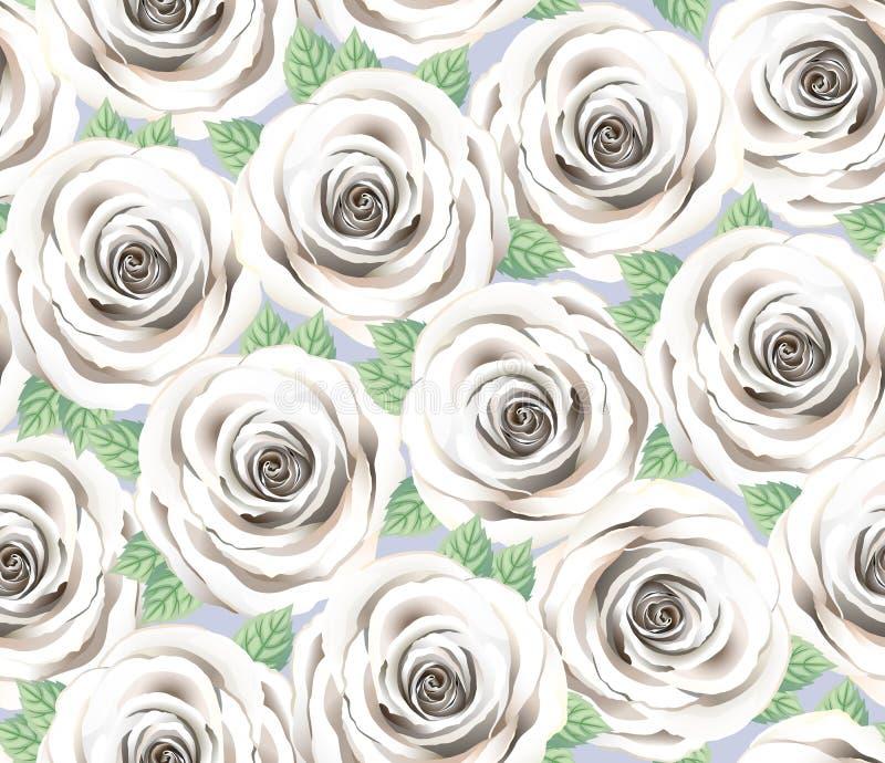 Modello di ventilatore a fiore di rosa bianco Cite Floral Background Elegant Tiffany Cream Roses Con Foglie, Grey Wallpaper illustrazione di stock