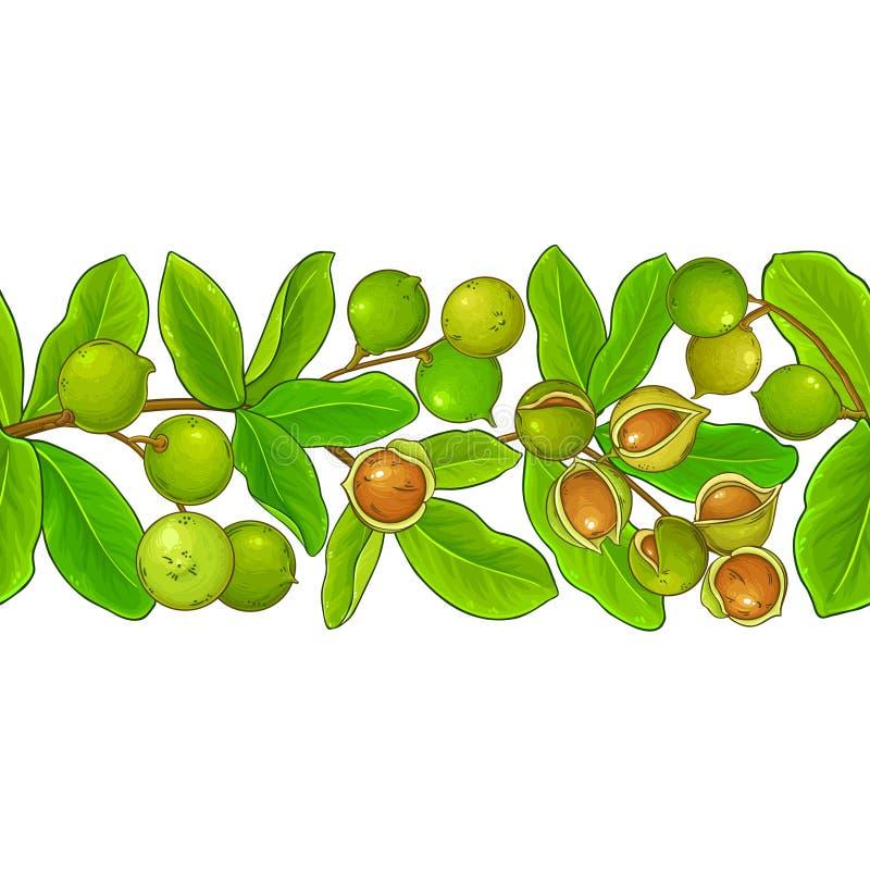 Modello di vettore della noce di macadamia illustrazione di stock