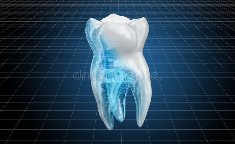 Modello di visualizzazione 3d cad del dente umano, rappresentazione 3D illustrazione di stock
