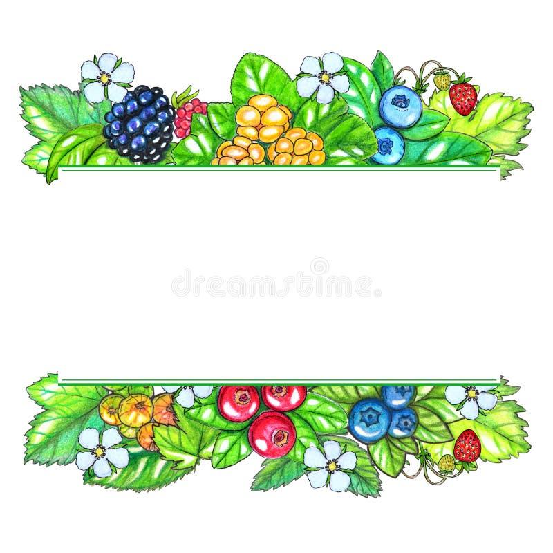 Modello dipinto a mano di watecolor con le bacche e le foglie isolate su fondo bianco illustrazione di stock