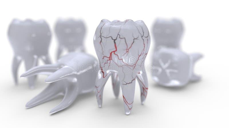 Modello e vene del dente sul bianco, rappresentazione 3d royalty illustrazione gratis