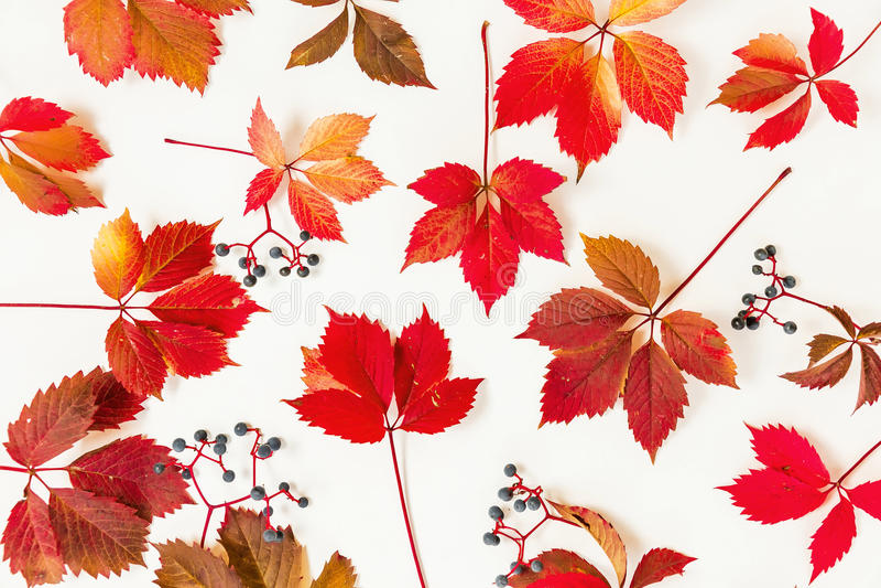 Modello fatto delle foglie di autunno rosse su fondo bianco Disposizione piana, vista superiore fotografie stock libere da diritti