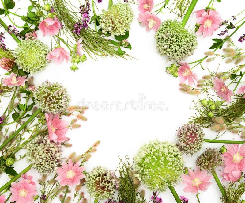 Modello femminile del prodotto di tema dei fiori selvaggi con uno spazio per una t fotografia stock