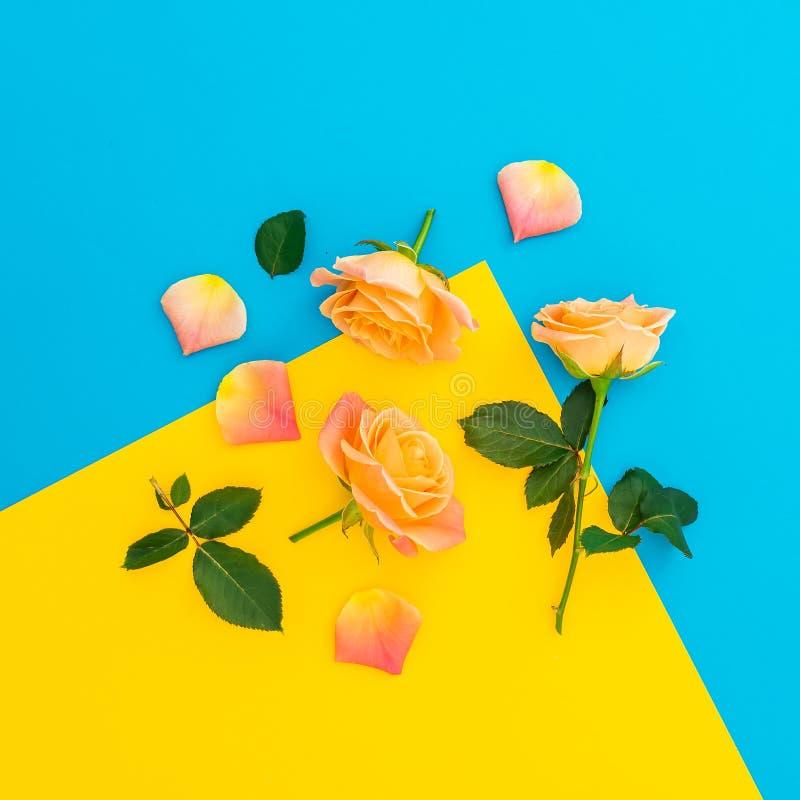 Modello floreale dei fiori delle rose con la foglia isolata su fondo giallo e blu Disposizione piana, vista superiore fotografia stock libera da diritti