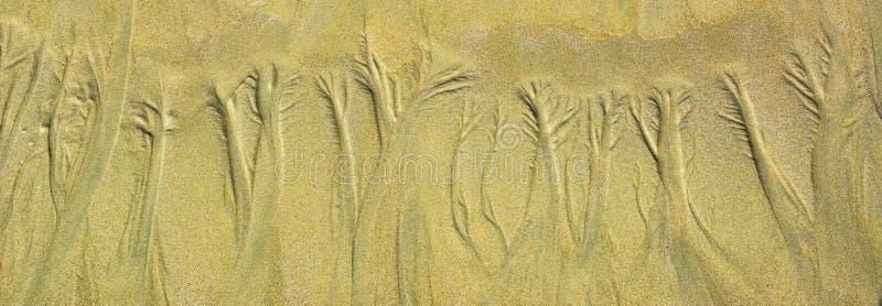 Modello floreale della sabbia naturale sulla spiaggia sabbiosa piana durante la bassa marea fotografia stock libera da diritti