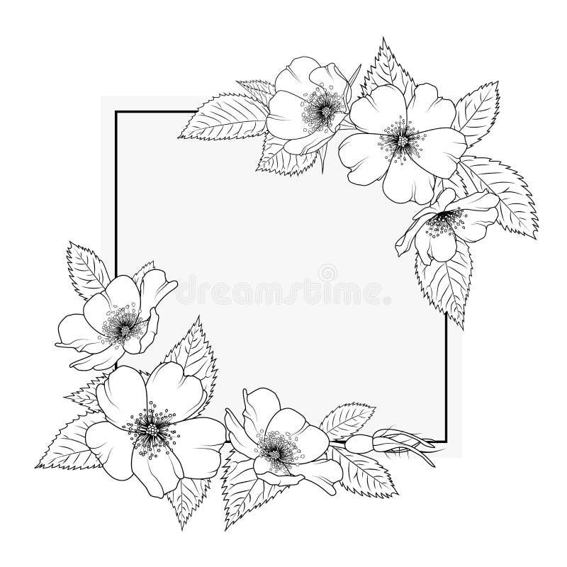 Modello floreale della struttura del confine di canina rosa selvaggio di rosa illustrazione vettoriale