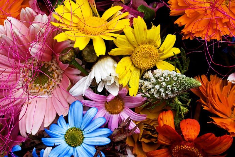 Modello floreale delle gerbere fotografia stock