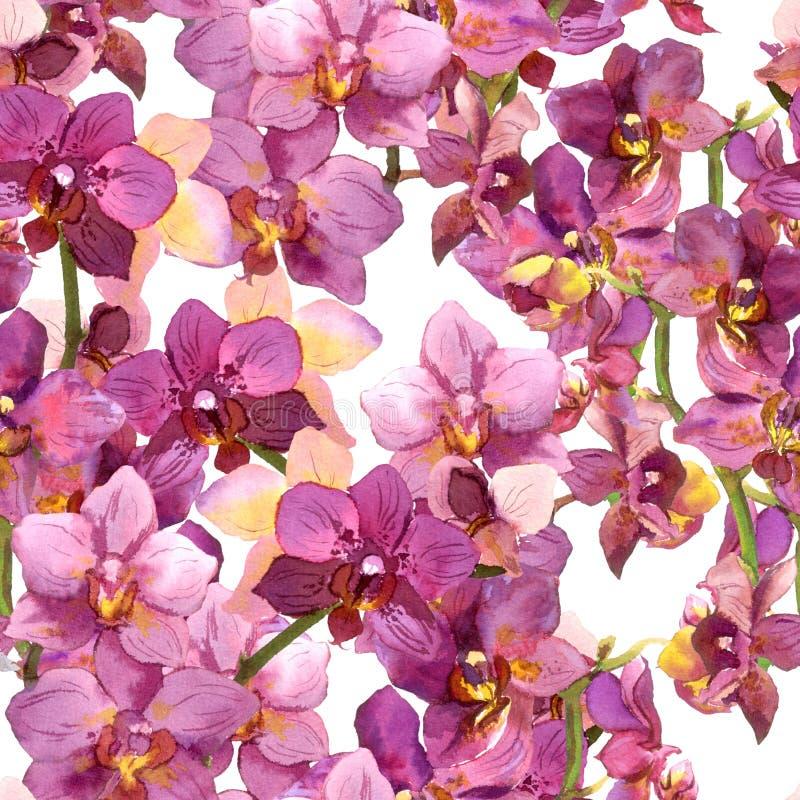 Modello floreale esotico - fiori vibranti dell'orchidea Fondo senza cuciture watercolour illustrazione vettoriale