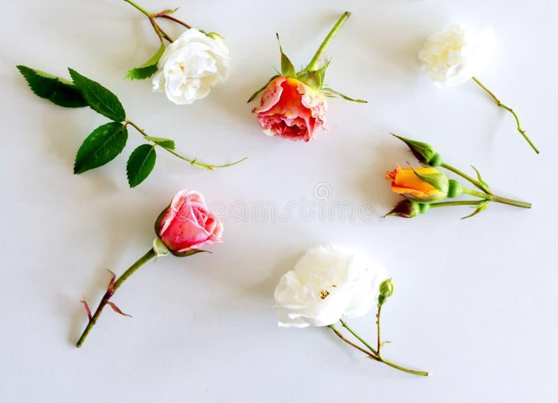 Modello floreale fatto delle rose bianche e di rosa, foglie verdi, rami su fondo bianco Disposizione piana, vista superiore valen fotografie stock libere da diritti