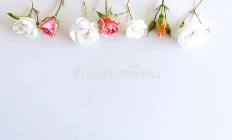 Modello floreale fatto delle rose bianche e di rosa, foglie verdi, rami su fondo bianco Disposizione piana, vista superiore valen fotografia stock libera da diritti