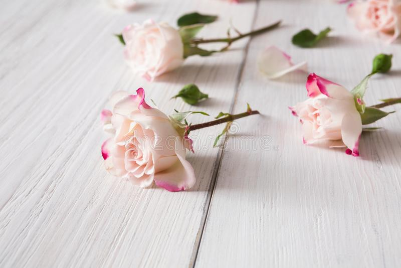 Modello floreale fatto delle rose rosa su legno rustico bianco, primo piano immagine stock libera da diritti