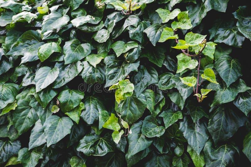 Modello floreale verde delle foglie Sfondo naturale da sopra Vista superiore fotografie stock libere da diritti