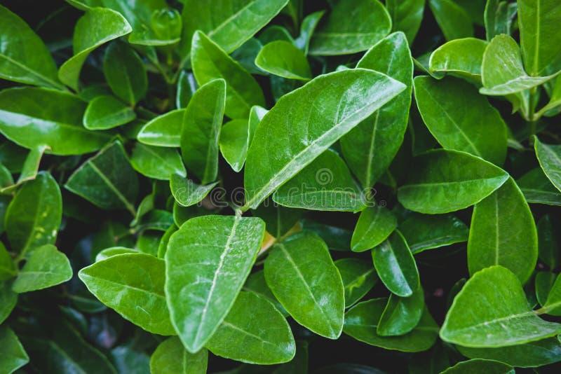 Modello floreale verde delle foglie Sfondo naturale da sopra Vista superiore immagini stock