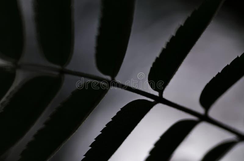 Modello fresco del fondo della natura della foglia fotografia stock