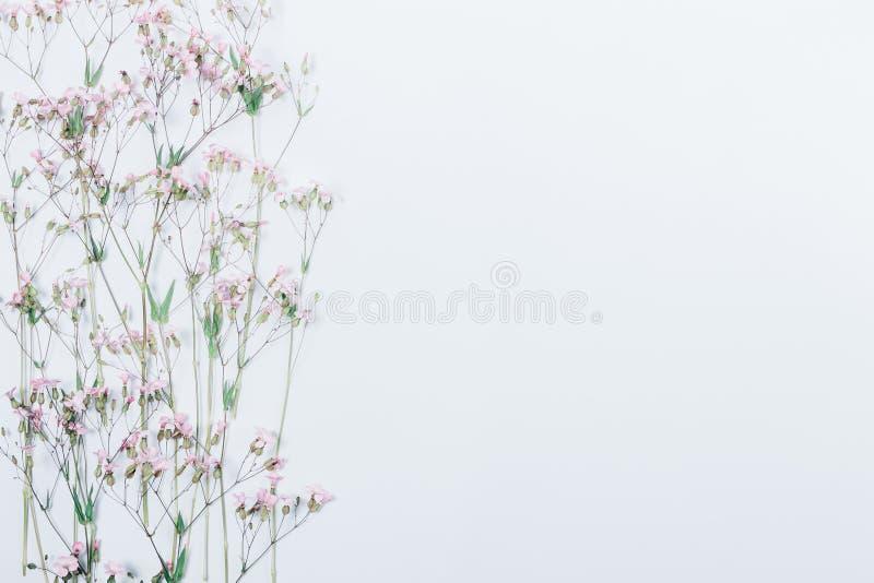 Modello laterale festivo floreale del confine con lo spazio della copia immagine stock libera da diritti