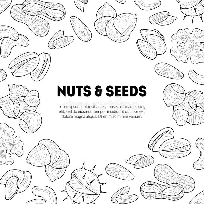 Modello naturale dell'insegna dei semi e dei dadi con il posto per il vostro vettore disegnato a mano del testo, dell'alimento bi illustrazione vettoriale