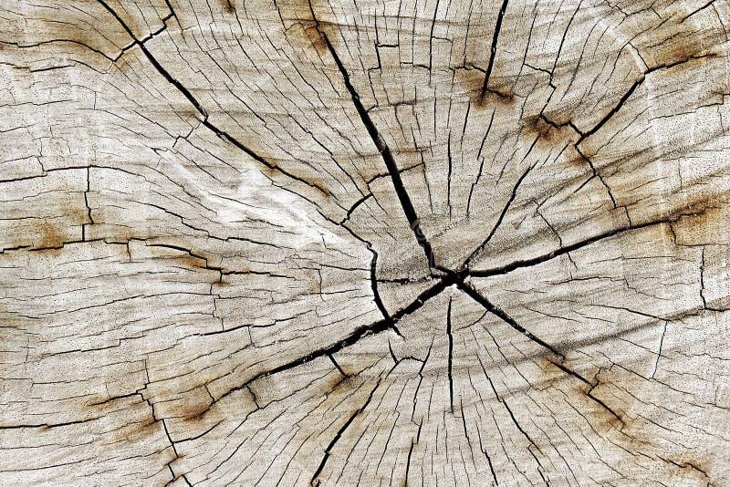 Modello naturale Struttura di legno del taglio del primo piano con l'albero bruciante della struttura fotografia stock