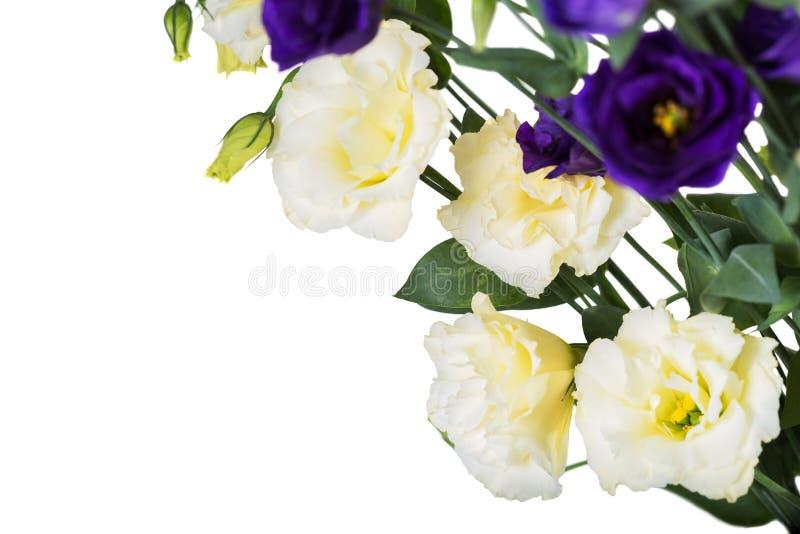 Modello romantico Fiori di eustoma del mazzo isolati su fondo bianco Spazio per il vostro testo fotografie stock