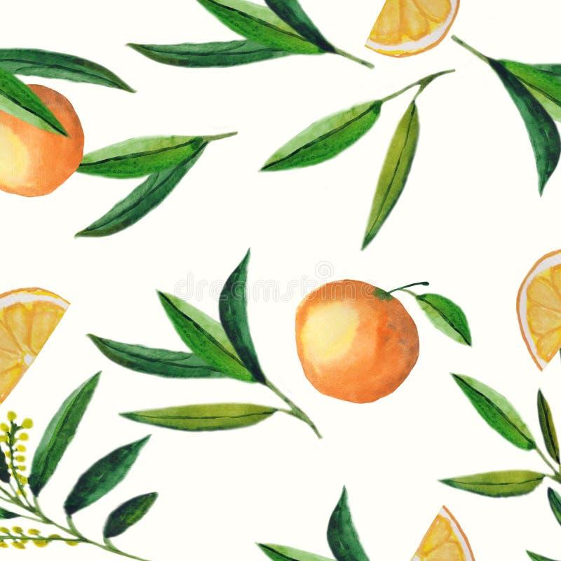 Modello senza cuciture arancio della frutta dell'acquerello dei fiori e delle foglie isolati su fondo bianco Prodotti biologici p illustrazione vettoriale