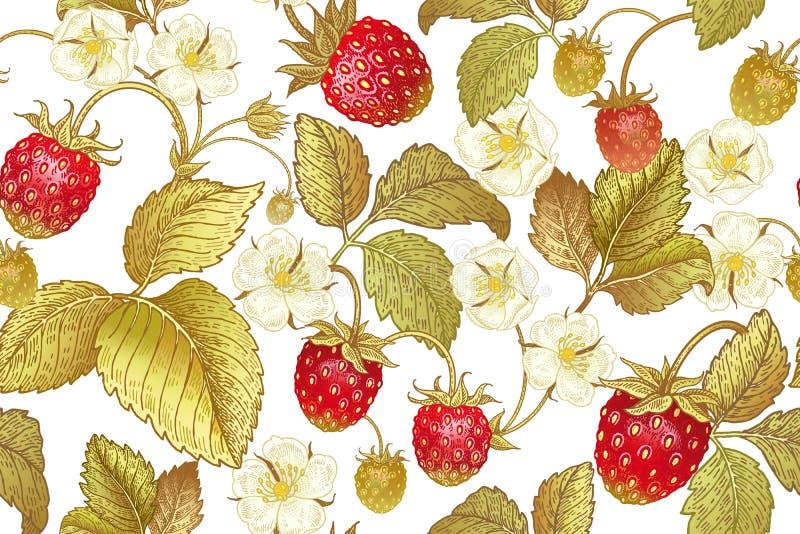 Modello senza cuciture botanico con la fragola royalty illustrazione gratis