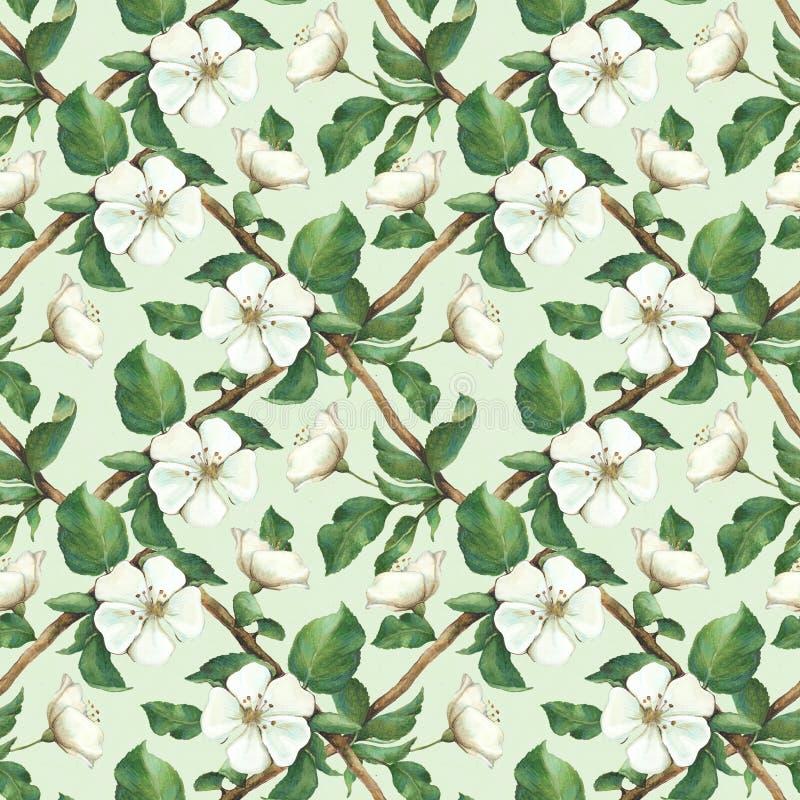 Modello senza cuciture con i fiori della mela dell'acquerello royalty illustrazione gratis