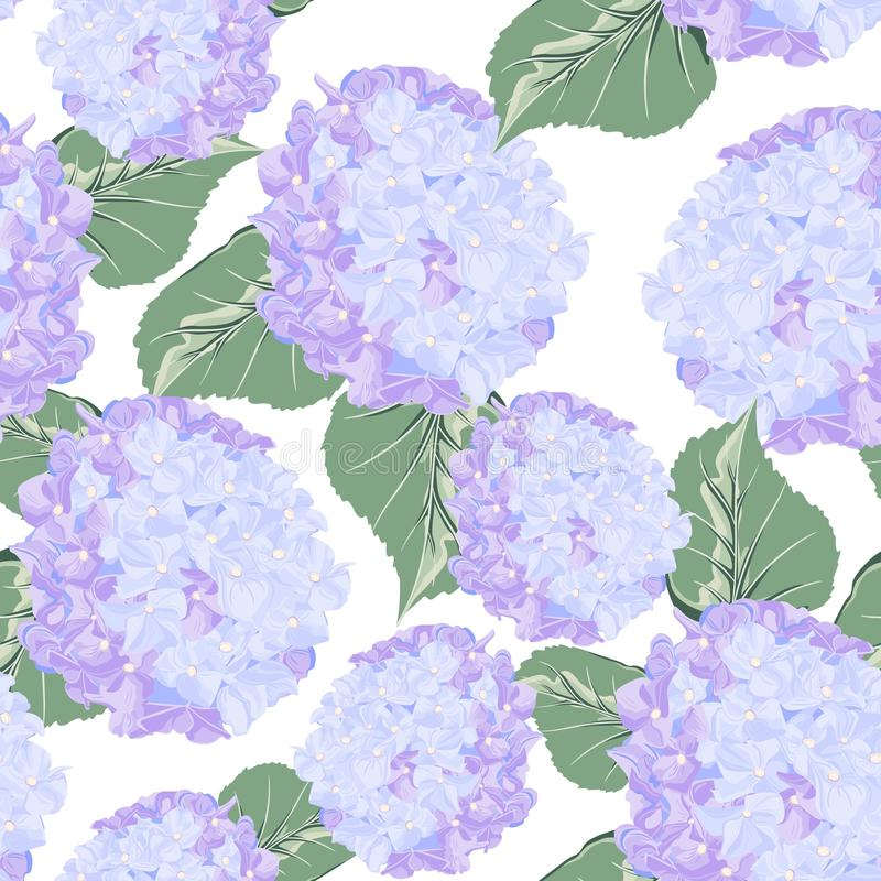 Modello senza cuciture con il fiore viola variopinto del hydrange su fondo bianco illustrazione di stock