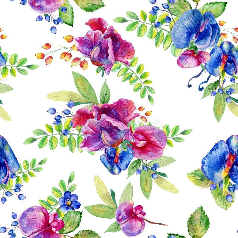 Modello senza cuciture con il rosa, pisello dolce blu, odoratus del Lathyrus, l illustrazione di stock