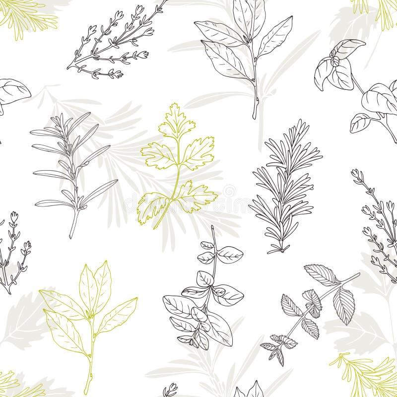 Modello senza cuciture con le erbe piccanti disegnate a mano Fondo culinario della cucina illustrazione di stock