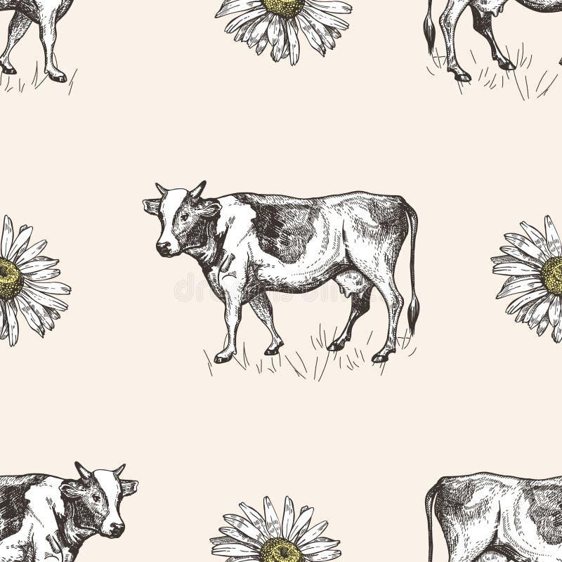 Modello senza cuciture con le mucche e le margherite Illustrazioni di schizzo royalty illustrazione gratis
