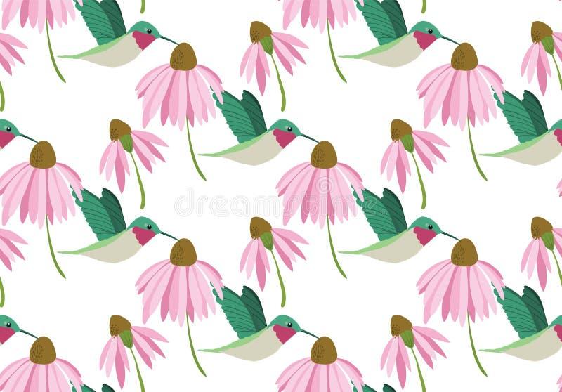 Modello senza cuciture dei colibrì variopinti di vettore su fondo bianco con i fiori rosa royalty illustrazione gratis