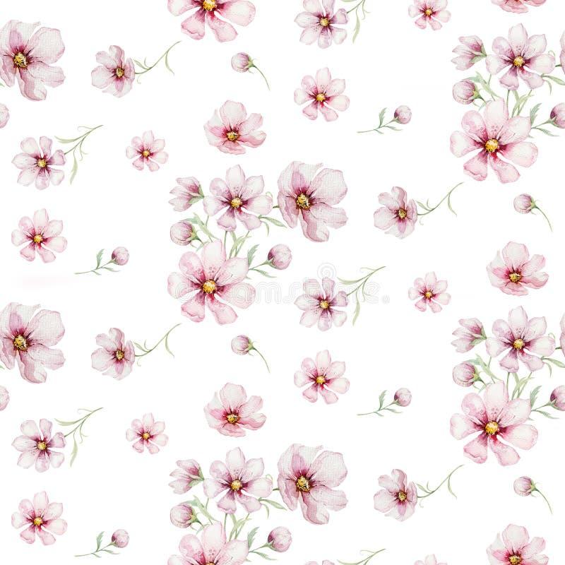 Modello senza cuciture dei fiori della ciliegia di rosa del fiore nello stile dell'acquerello con fondo bianco Fioritura di estat illustrazione vettoriale