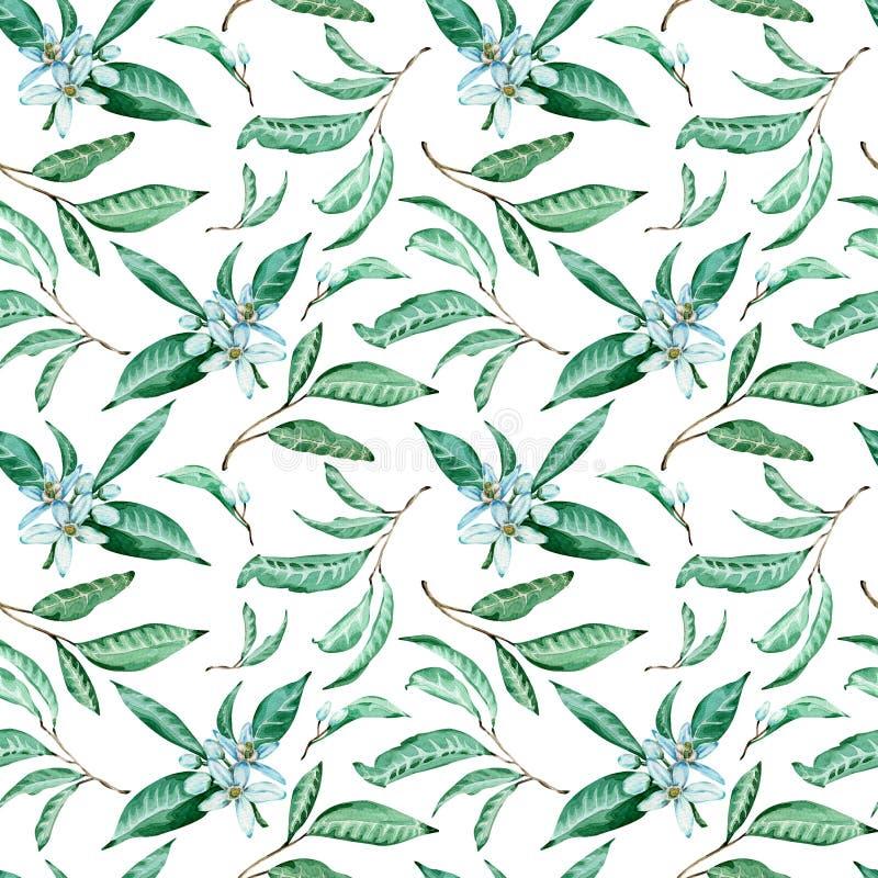 Modello senza cuciture dei fiori e delle foglie del mandarino su fondo bianco Fondo tropicale dell'acquerello illustrazione di stock