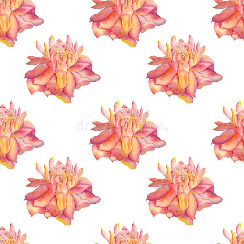 Modello senza cuciture del fiore dello zenzero illustrazione di stock