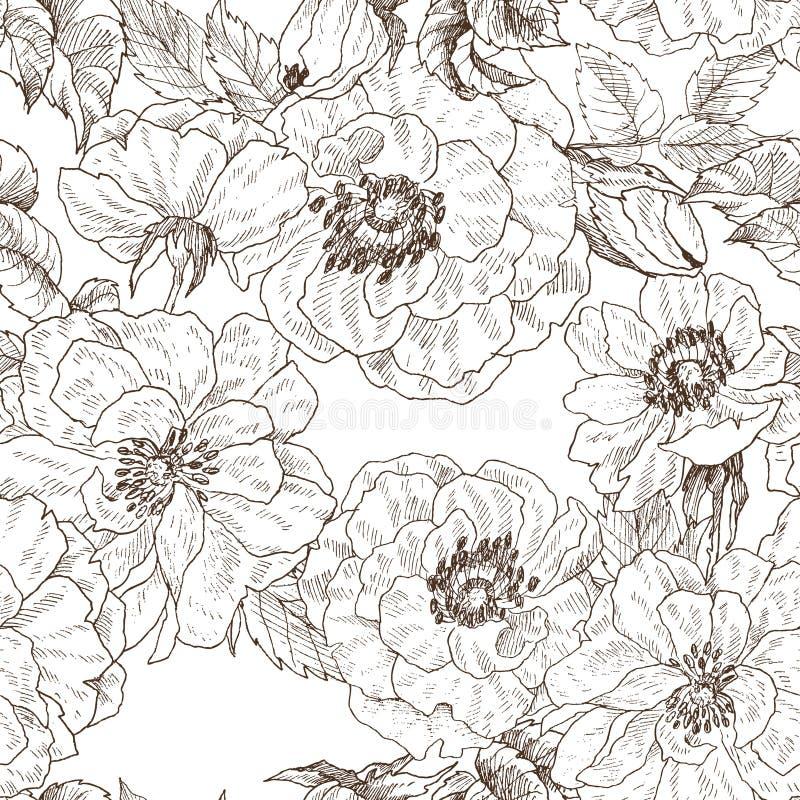 Modello senza cuciture del ramo selvaggio del fiore delle rose isolato su bianco Illustrazione disegnata a mano botanica d'annata illustrazione di stock