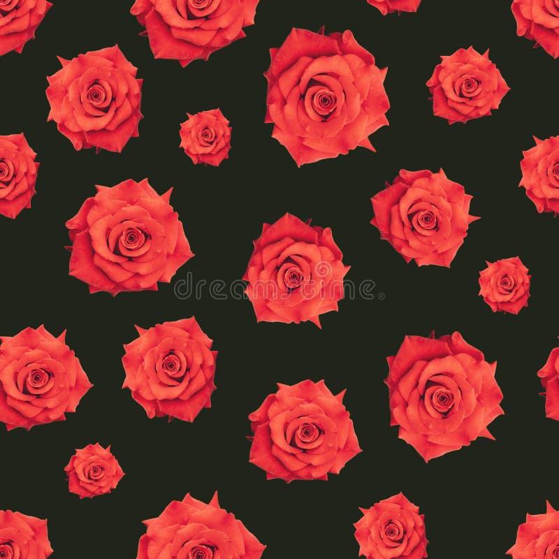 Modello senza cuciture del tessuto romantico delle rose rosse Fiore rosso su un fondo verde scuro Stampa decorativa d'annata di s fotografia stock libera da diritti