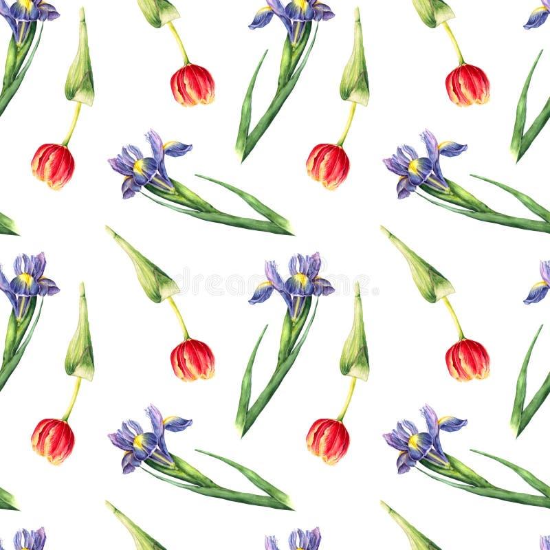 Modello senza cuciture del tulipano e dell'iride dell'acquerello su fondo bianco illustrazione di stock