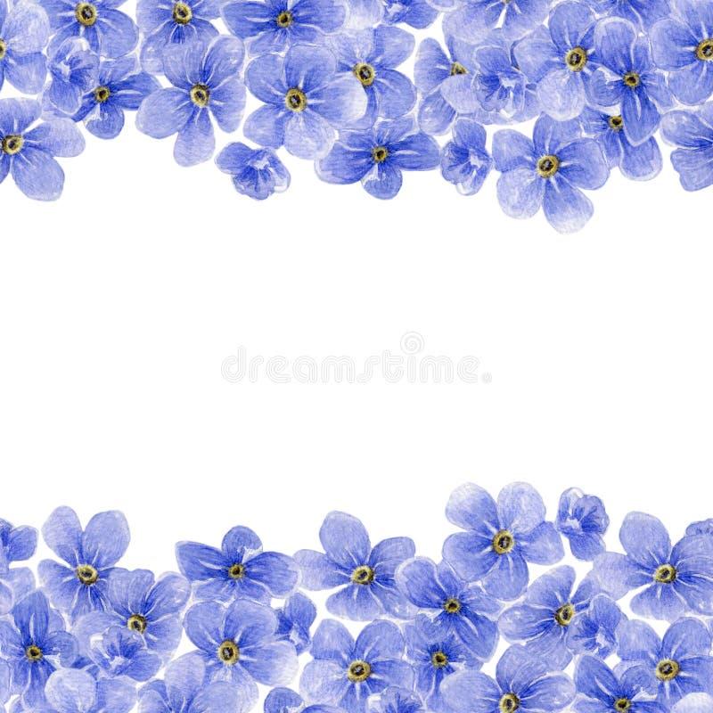 Modello senza cuciture dell'acquerello con i fiori blu di myosotis immagine stock
