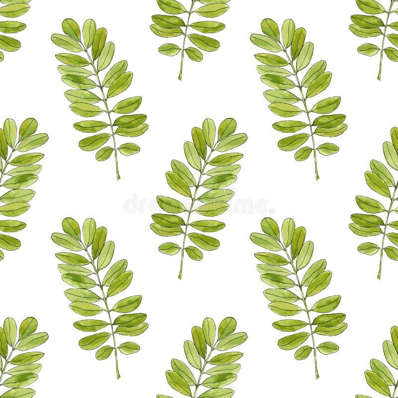 Download Modello Senza Cuciture Dell'acquerello Con Le Foglie Dell'acacia Fondo Disegnato A Mano Per L'imballaggio, Tessuto Di Vettore Illustrazione Vettoriale - Illustrazione di ripetizione, carruba: 56883987