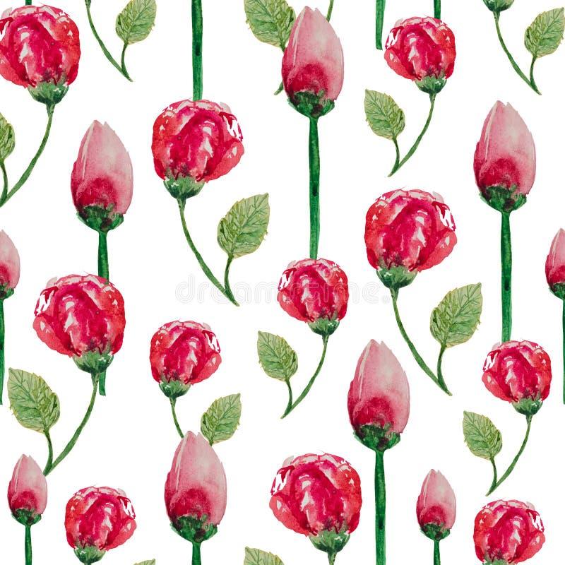 Modello senza cuciture dell'acquerello delle rose di tè su un fondo bianco illustrazione vettoriale