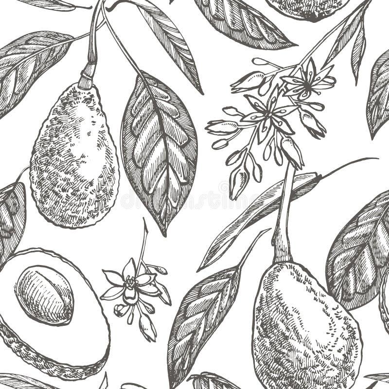 Modello senza cuciture dell'avocado Illustrazioni disegnate a mano Avocado, schizzo affettato dei pezzi, di metà, della foglia e  illustrazione di stock